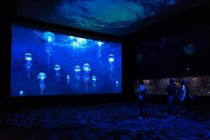 AcquariodiGenova pianeta blu