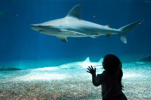 acquario di genova squalo